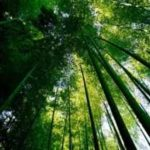小学校のそばの竹林