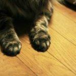 飼い主を思う猫の話
