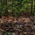 怖い話 森の中の廃屋