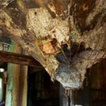 廃病院の地下
